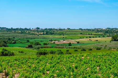 a view over the vineyards in La Argilaga, a small farming village in Tarragona Province in Catalonia, Spain
