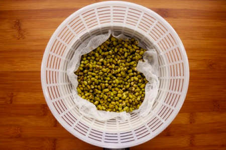 The next day, rinse the mung bean and place in a colander lined with gauze. Place the colander in a container of such a size that it does not touch the bottom of the container. Now, during the day, it is necessary to pour a glass of clean cold water onto the mung bean every 2-3 hours. Let the water drain and then empty the container. The sprouting mung bean is best kept in a cool, dark place.