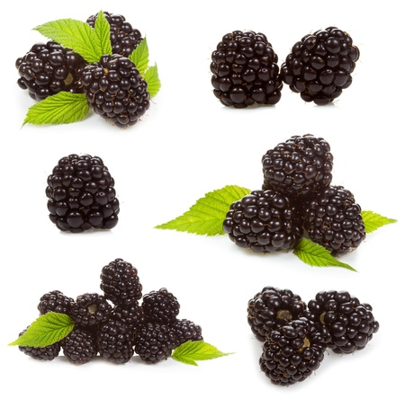 blackberries: set with  blackberries on a white background