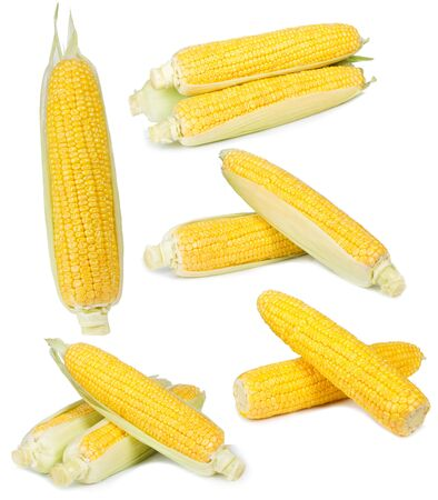 yellow corn: set with corn on a white background
