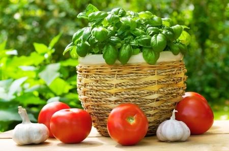 fresh green basil with tomatoes and garlic photo