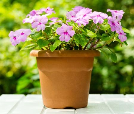 Summer flowers in a garden Stock Photo - 20883299