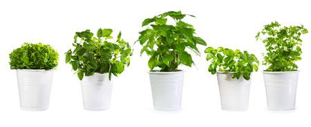 白で隔離緑鉢植えのセット
