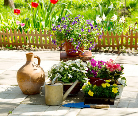 Summer flowers with garden tools photo