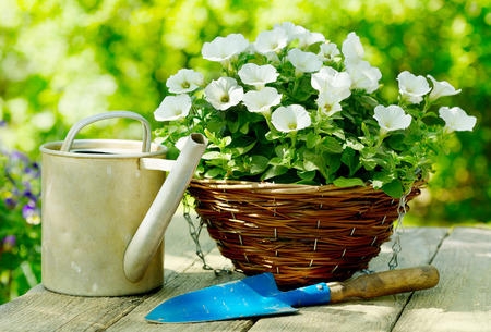flower pot: summer flowers with garden tools