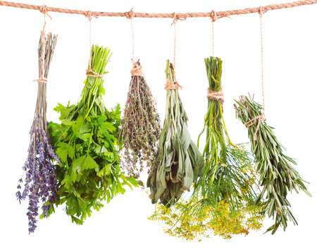 various fresh herbs hanging isolated on white background
