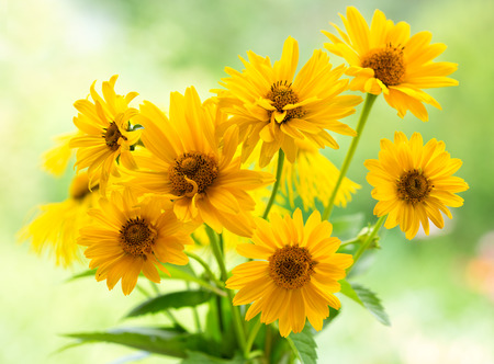 bouquet of yellow daisy flowers on green background