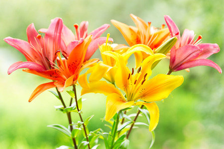 녹색 배경에 다양 백합의 꽃다발