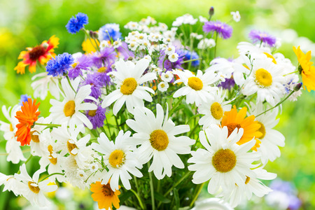 bouquet of summer flowers on green background 免版税图像 - 43275254