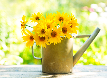 bunch of flowers: yellow daisy flowers in watering can on wooden table