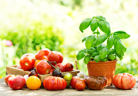 basils: fresh tomatoes and green basil on wooden table Stock Photo