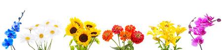 marguerite: ensemble de divers bouquet de fleurs isol� sur fond blanc