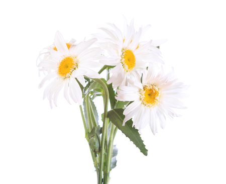 floral objects: bouquet of daisy flowers isolated on white background Stock Photo