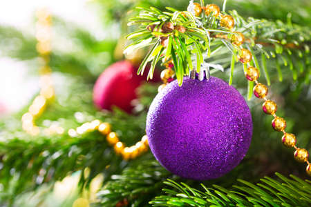 christmas tree ball: Christmas decorations : purple ball hanging on branch of fir tree