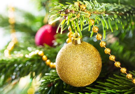gold christmas decorations: Christmas decorations : gold  ball hanging on branch of fir tree.
