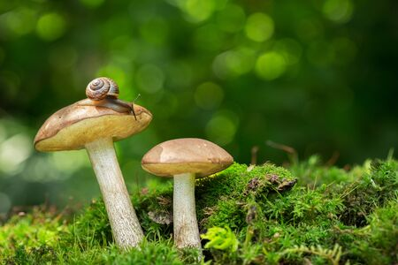 Edible mushrooms in a forest on green background, Reklamní fotografie