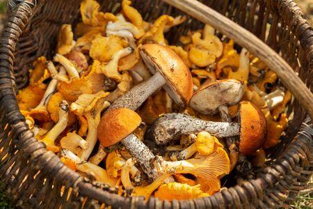 Basket of various edible mushrooms, top view Reklamní fotografie