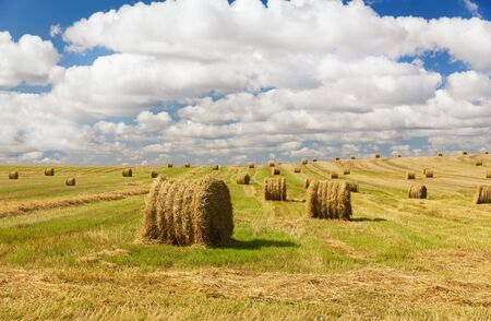 landscape with hay bale field after harvest