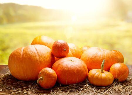 Orange pumpkins on wooden table at sunset. Autumn harvest background Reklamní fotografie