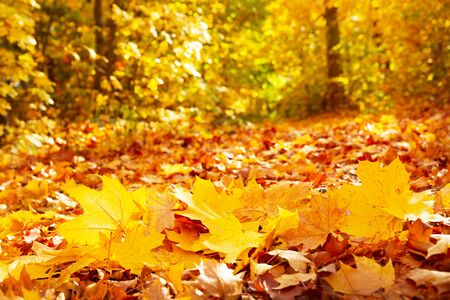 close up of colorful autumn leaves in a park, autumn background