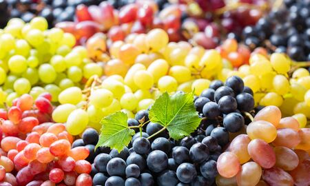 mix of colorful ripe grapes as background