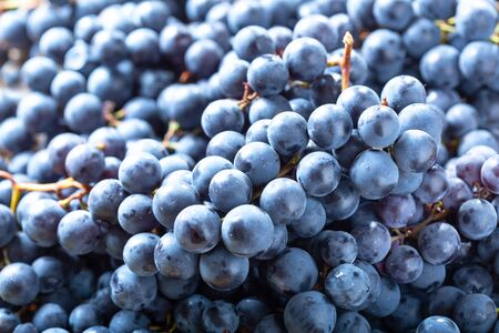 close up of ripe grapes as background