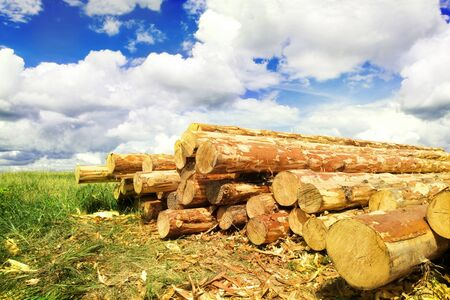 Woodpile in field