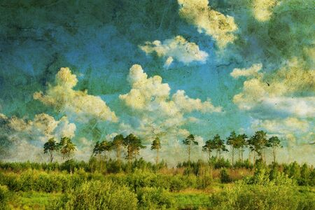Pine forest over sky and a meadow