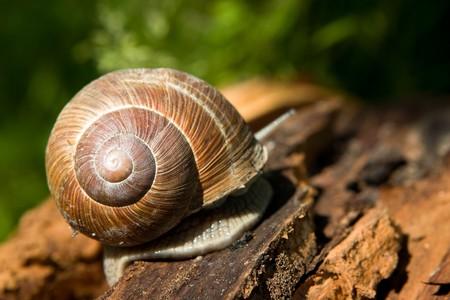 Snail on a tree bark Stock Photo