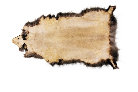 actual leather sample, skin isolated on white Stock Photo
