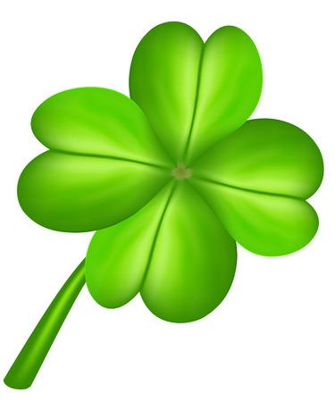 four leaf: Four leaf clover isolated on white. Vector illustration