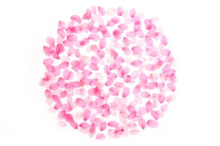 circle cherry blossom petal