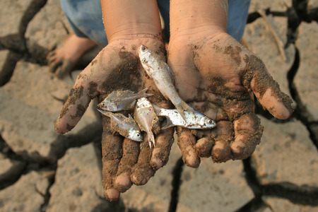 lands: Dead fish on child hand, metaphoric for climate change and water crisis