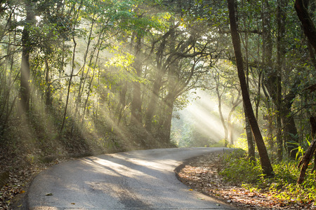Ray light and the road in tropical forest. Picture shot from Doi Suthep, Chiang Mai, Thailand. 免版税图像