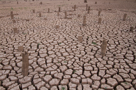 no water: Drought impact, no water in the lake with dead tree around the cracked land