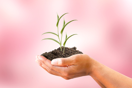 creeping plant: Human hand holding creeping plant with soil on blurred pink background. Ecology, Environment, Love Tree, Healthy, Investment concept. Stock Photo