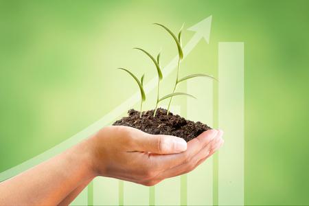 Hand und Sprout Baum mit wachsender Grafik auf schönen grünen abstrakten Hintergrund, metaphorische für Finanzen, Investitionen, Einkommen, Zinsen, Geschäftsleben, Banken, Marktanteil und Wirtschaft