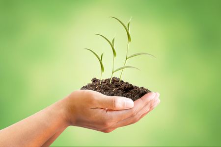 metaphoric: Hand holding Sprout Tree with beautiful green abstract background, metaphoric for Finance, Investment, Income, Interest, Business, Banking, Market share, Economy, Oxygen increase and Conservation