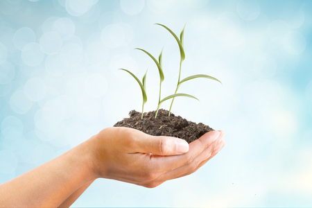 Hand and Sprout of tree with soil growing up on blue abstract background, metaphoric for Finance, Income, Interest, Business and Banking