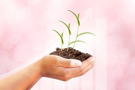 Hand and Sprout Tree with growing graph on beautiful pink abstract background, Good healthy,Birth rate,Average age,Medical,Organ donate,Social,Quality of life,insurance and Human Kindness concept