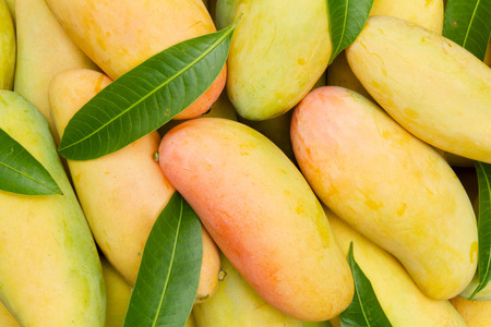 Ripe Mangoes stack with leaves top view