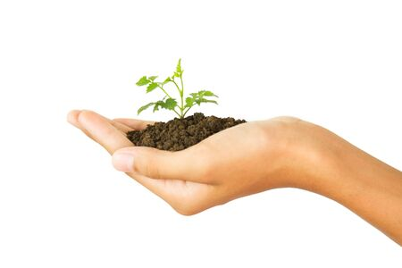 Close up hand holding young plant, isolated white background