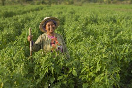 Gelukkige vrouwenlandbouwer die in groen organisch landbouwbedrijf glimlachen