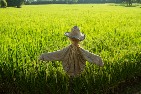 straw scarecrow protecting rice fields from birds Stock Photo