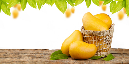 Yellow mango in basket on wood table with mango tree background and white space for copy text Stock Photo