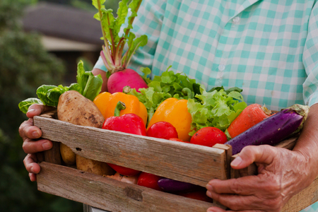 Many Vegetable in wood crate holding by senior woman. Retirement healthy care, healthy eating and clean food concept.