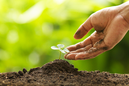 Hand touching leaf of seedling by gentle and care, Environment conservation, reforesting and Development Concept Archivio Fotografico