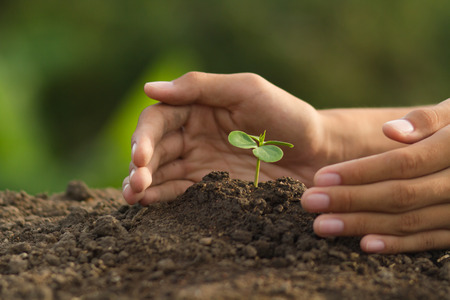 Hand protect plant grow on soil with green nature background Standard-Bild - 120394044