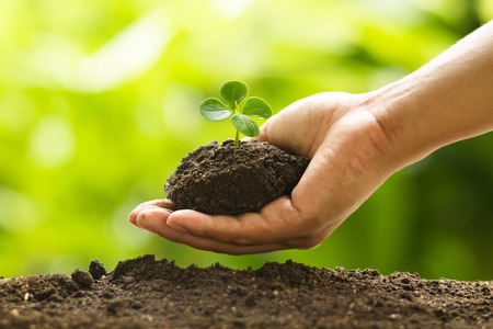Hand putting small plant to soil with care, Farmer hand grow young plant on dirt at organic farm with green nature background. Standard-Bild - 120394801