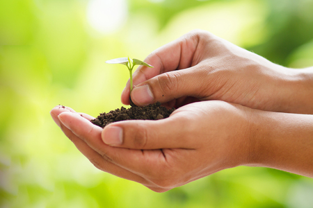 Small plant growth on soild on hand with green nature background
